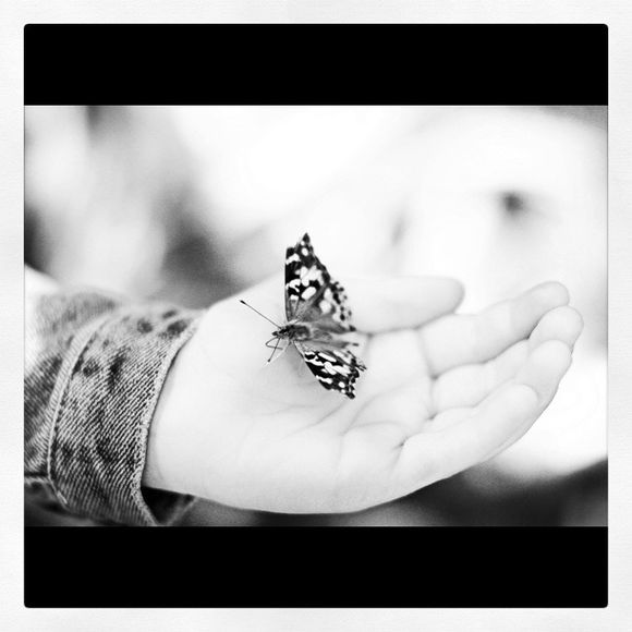 Butterflies & A Happy Monday!